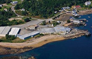 Maine Fair Plant